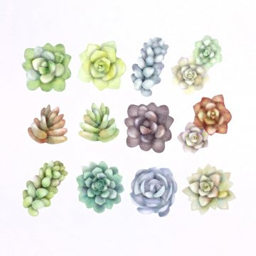 Bande Washi Roll Sticker Sedum